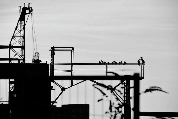Low angle view of birds perching on metal structure