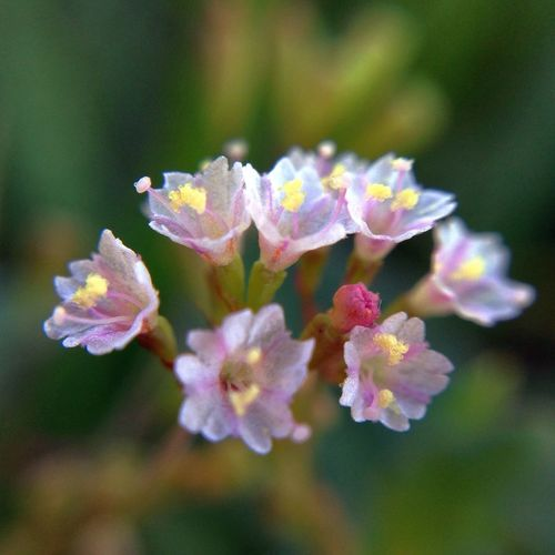 Wild flower บอกตรงๆโคตรเหนื่อย อยากจะหยุดหายใจสักสามวัน Macroclique Rsa_macro Flowerporn Macro_collection