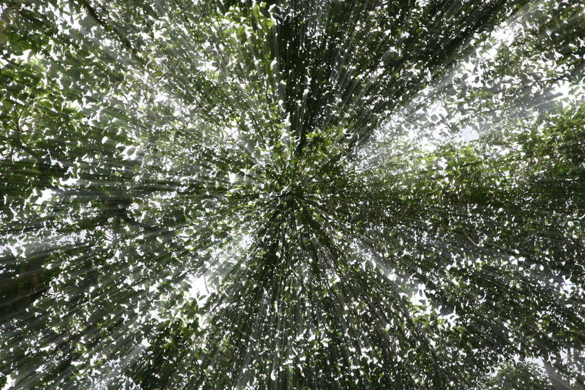 Perspectives On Nature Backgrounds Full Frame Nature No People Day Green Color Pattern Outdoors Abstract Tree Beauty In Nature Freshness Zoom Burst Leaves Be. Ready. EyeEm Ready