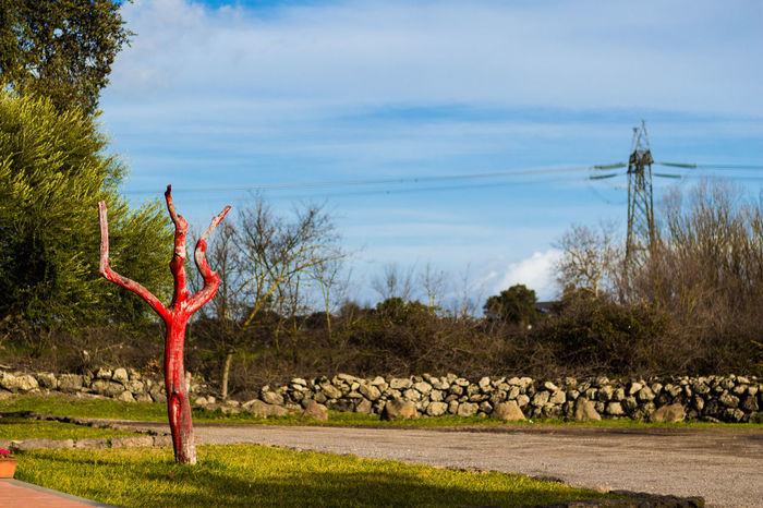 Sin Tree Red Tree Sin  Sky Contrast Colors Passion Red Skyline Sunset Sardinia Sardegna Travel Holiday Art Tree No People Outdoors Day Travel Destinations Sky Landscape Grass Water Nature Cloud - Sky Field