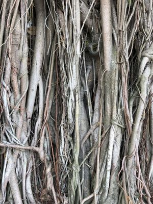abstract beauty of the roots not many people noticed Abstract Photography Textured  Abstract Close-up Detailed Intertwined Nature Root Rootedstreets First Eyeem Photo