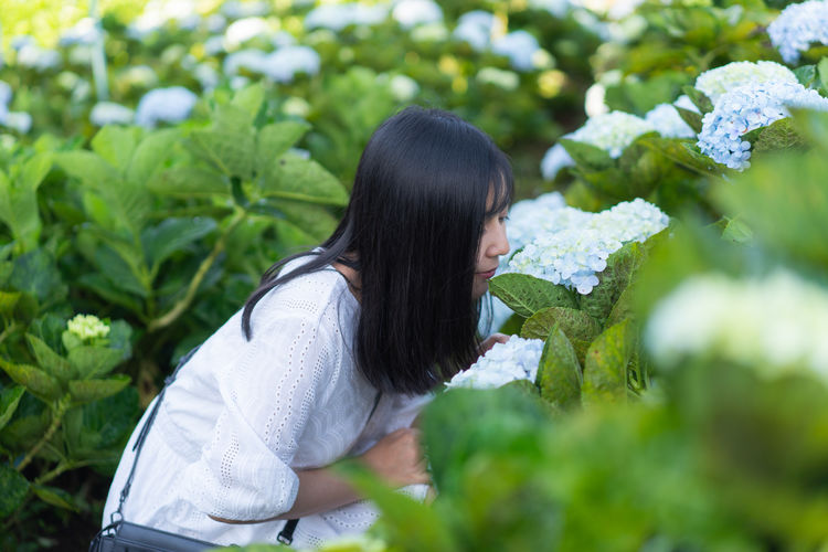 Smelling hydrangea flower Smelling Smell Smelling The Flowers Asian  Thailand Girl Hydrangea Flower Hydrangea Black Hair Candid Plant One Person Long Hair Hairstyle Young Adult Hair Leisure Activity Side View Real People Day Growth Adult Young Women Lifestyles Nature Casual Clothing Green Color Women Leaf Outdoors Beautiful Woman Profile View