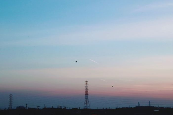 Sky Flying Day Aichi No People Sunset Sunset_collection Sunset Silhouettes Sunsets 日本 Sunsetlover 夕陽 夕日 Bird Silhouette Japan