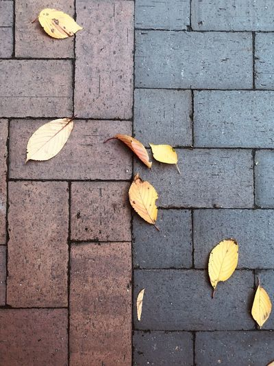 High angle view of yellow maple leaves on footpath