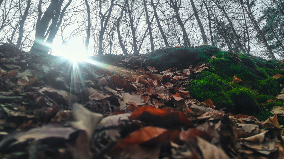 Sunbeam Lens Flare Sunlight Sun Tree Nature Low Angle View Leaf Beauty In Nature Growth No People Outdoors Branch Refraction Day Streaming Close-up Sky Szczecin Puszcza Wkrzańska