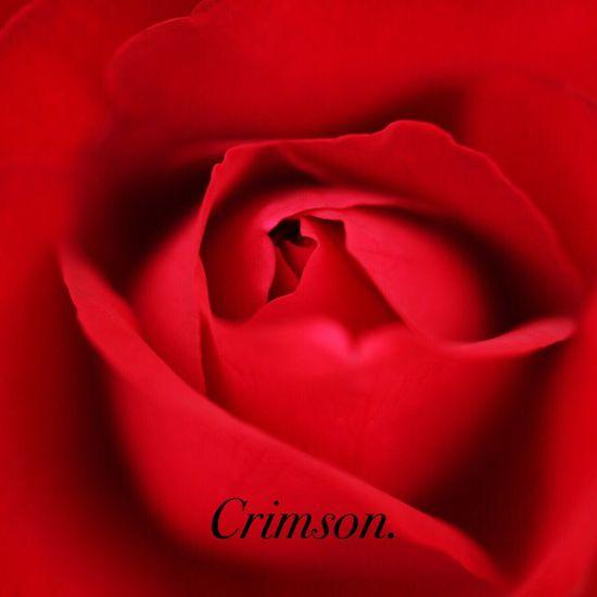 Rose. Flowers Roses Canon70d Macro Canon Fukui Japan