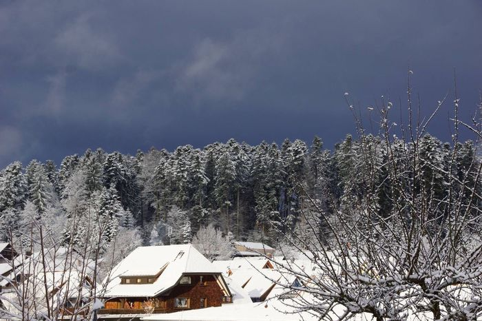 Blackforest .... No People Tranquility Tradition Home Nature Weather Wind Wintertime Winter Blackforest