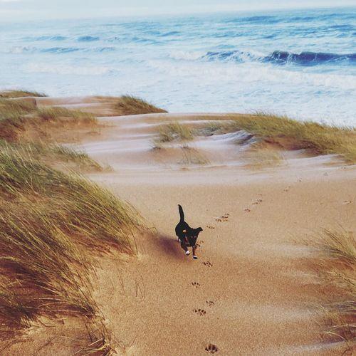 High angle view of dog running at beach
