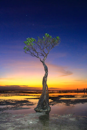 walakiri beach, sumba timur Water Sunset Tree Blue Sky Landscape Horizon Over Water