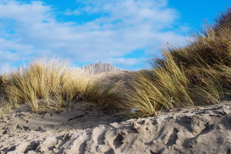 Nature Tranquility Sky Beauty In Nature Tranquil Scene Winter Outdoors Scenics Landscape Dunes Grass Hill Blue Bluesky Clouds And Sky Sunny Nikon Nikonphotography Full Frame