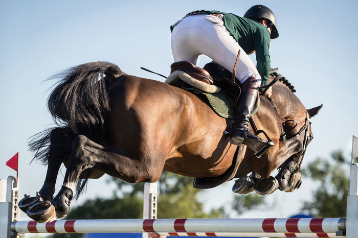 Equestrian Sports, Horse Jumping Barrier Competition Contest Course CSI Equestrian Equine Event Horse Horse Jumping Horseback Horsemanship Horsewoman Jumping Mammal Movement Obstacle Outdoor Purebred Racing Rider Riding Sportsman Track équitation
