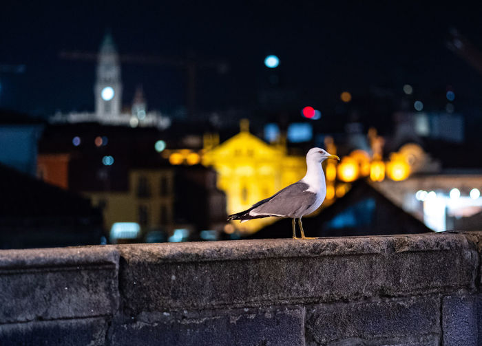 Architecture Bird Animal Vertebrate Animals In The Wild Animal Themes One Animal Focus On Foreground Animal Wildlife Illuminated No People Built Structure Building Exterior Wall Retaining Wall City Night Perching Nature Outdoors