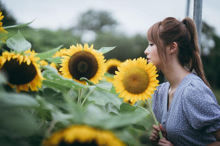 Close-up of sunflowers on sunflower