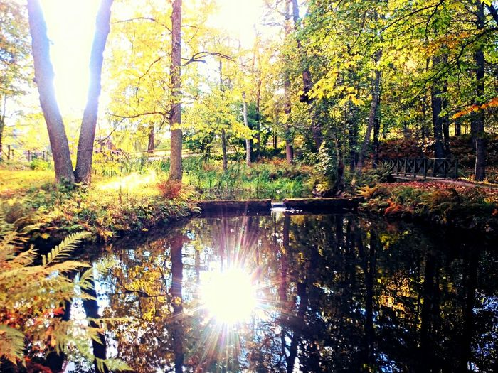 Trees Water Reflections Water Autumn Park Pond