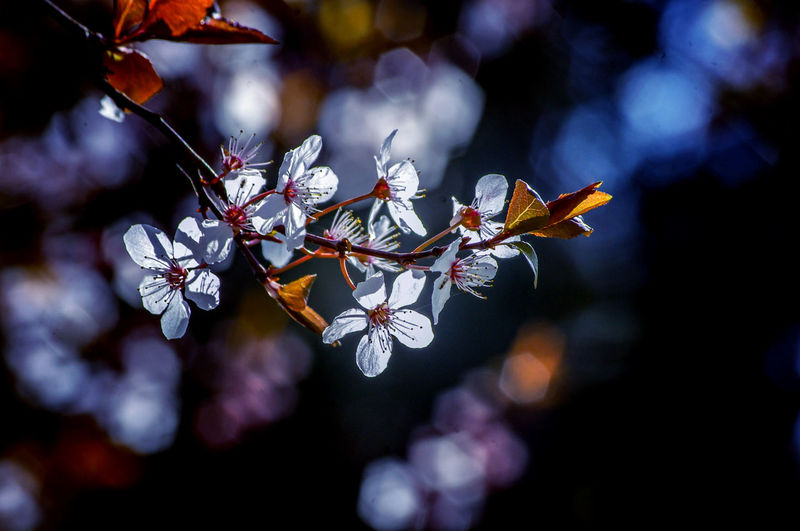 EyeEm Best Shots EyeEm Nature Lover EyeEmBestPics EyeEm Best Shots - Nature Beauty In Nature Wonders Of Nature Flower Tree Beauty Arts Culture And Entertainment Springtime Close-up Cherry Tree Plant Life Pollen In Bloom Fruit Tree Branch Blooming Flower Head