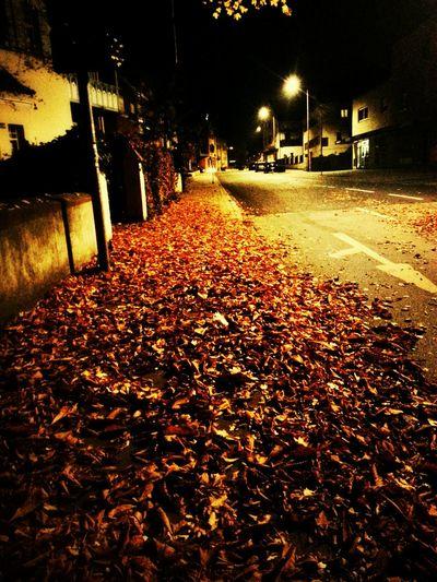 Colors Of Autumn Autumn Leaves Autumn Autumn Collection