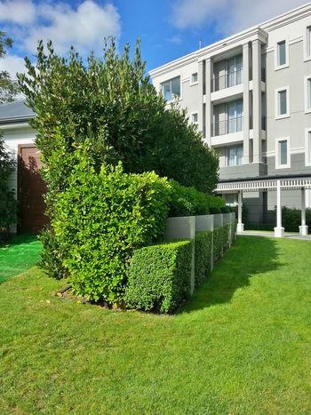I liked the shape of this bush. Hotel Lake Taupo New Zealand Scenery Wedding Wedding Venue