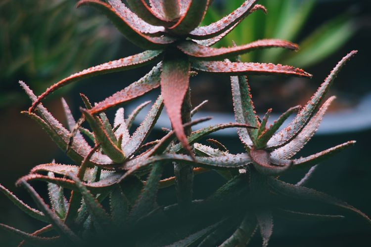 Close-up of spiked plant