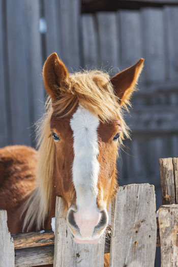 Close-up of a horse on wooden fence