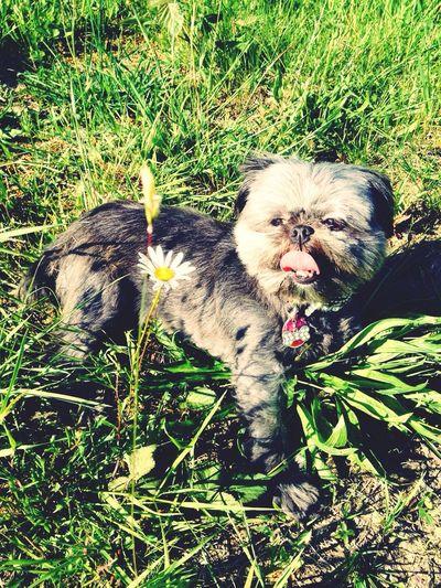 Dog Babe Fresh Life Pup Chillin Keepingitcool KillinIt