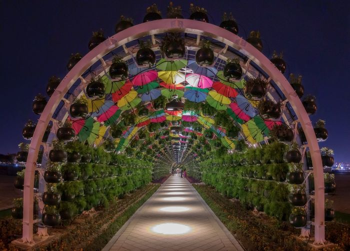Rose tunnel Illuminated Direction Night The Way Forward Plant Architecture Nature Lighting Equipment Garden No People Diminishing Perspective Tree Built Structure Formal Garden Park Multi Colored Outdoors Park - Man Made Space Arch