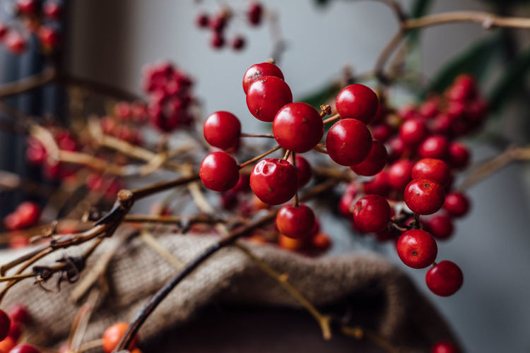 Dry branch of rowan berries Dry Leaves Flower Arrangement Natural Natural Beauty Rowan Tokyo Tokyo,Japan Branch Close-up Day Dry Branches Dry Flower  Growth Interior Interior Design No People Red Red Berries Red Berries In Tree Red Berry Rowanberries Rowanberry Rowanberry Tree Window Light