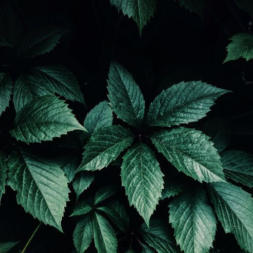 Leaf Green Color Plant Growth Nature No People Beauty In Nature Herb Night Close-up Outdoors Freshness