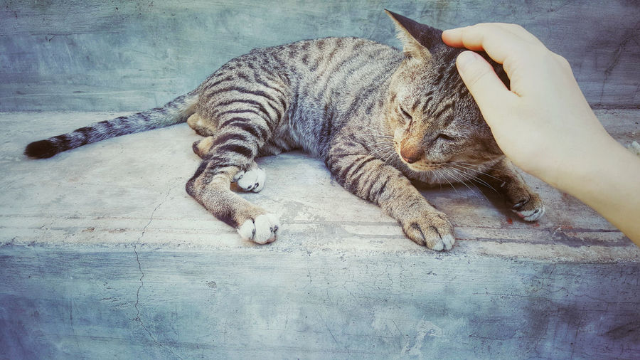 Chance Gentle Benign Sleepy Hug Home Help Shelter Vintage Colorful Love Adorable Tabby Cat Pat Head Stray One Animal Relaxation Pets Mammal Domestic Animals Cat Feline High Angle View One Person Real People Indoors  Domestic Cat Human Body Part Lying Down Lifestyles