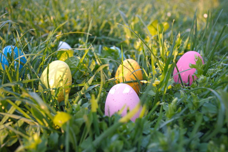 Easter Egg Celebration Easter Egg Holiday Grass Nature Flower Selective Focus Holiday - Event Food Close-up Multi Colored Growth Springtime No People Outdoors Colorful Pink Color Blue Green Yellow