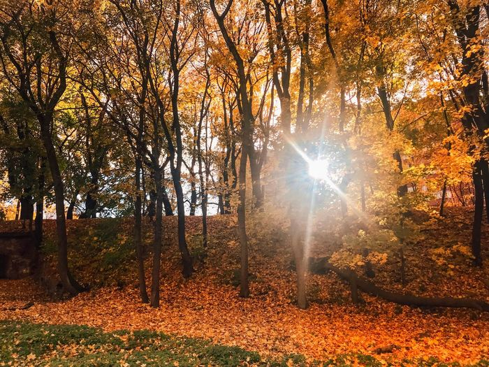 Tree Sunlight Plant Nature Beauty In Nature Autumn Sunbeam No People Sky Growth Change Non-urban Scene Scenics - Nature Sun Tranquility Plant Part Forest Orange Color Idyllic Land