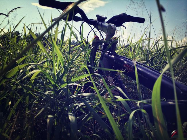 Bicycle Taking Photos Nature Landscape