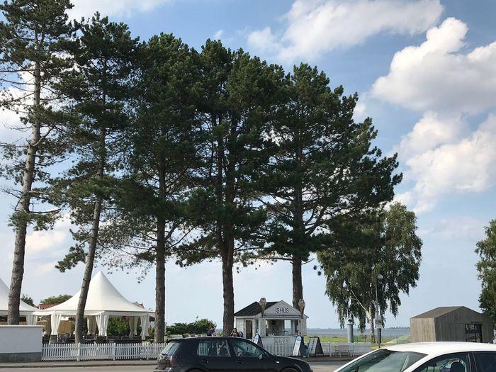 Outdoors Tree Sky