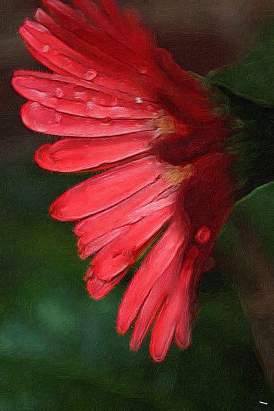 Flower Beauty In Nature Close-up Vibrant Color Paint Edit Photo