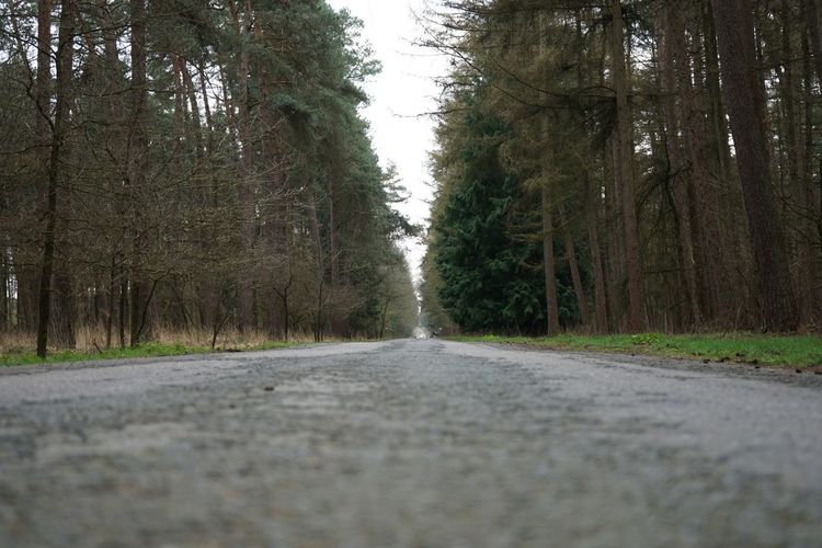 Road to nowhere Plant Tree Road The Way Forward Growth Transportation Direction Nature Day No People Diminishing Perspective Green Color vanishing point Beauty In Nature Outdoors Tranquility Non-urban Scene Empty Road Street Land