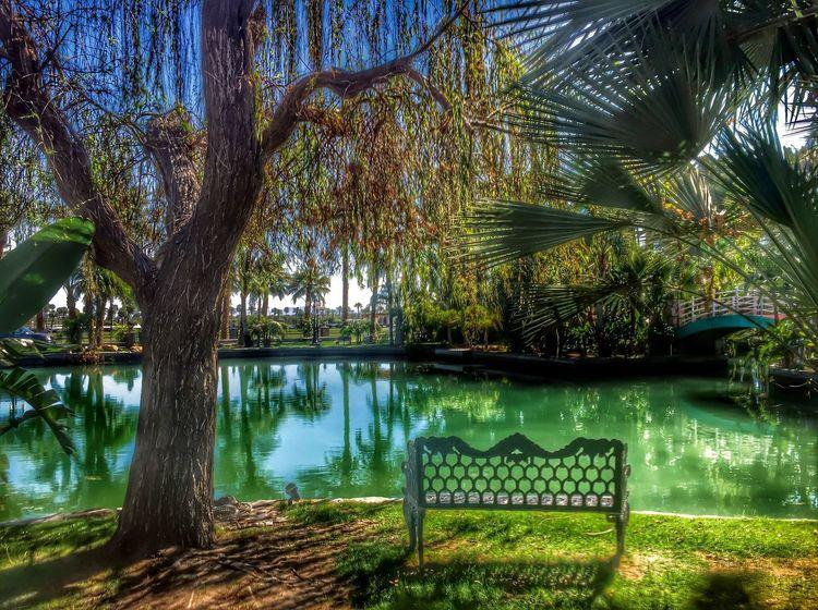Timages Empirepoloclub Coachella Coachella2016 Palmdesert Palmsprings Palm Springs Palmtrees Palm Trees Laquinta Indianwells Ranchomirage EyeEm Best Edits Eye4photography  EyeEmBestPics Popular Photos Popular