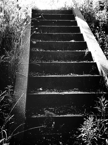 Blackandwhite Stairs Nature Walking Around