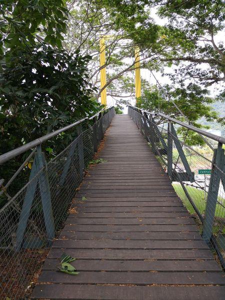 Tree Footbridge Bridge - Man Made Structure Railing Sky Rope Bridge Boardwalk Narrow Wood Paneling Long Lane Walkway Pathway Woods