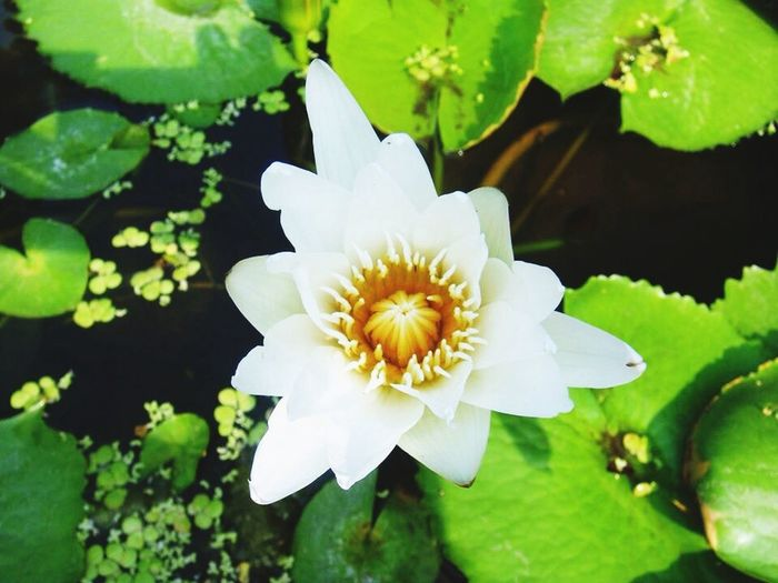 Flower Pretty Nonchalant Beauty Eyem Best Shots