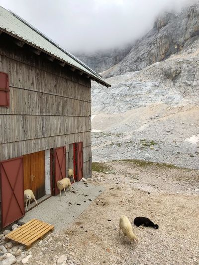 Sheep stall in The Alps White Sheep Sheep In Nature Black Sheep Sheep Stall Wooden Stall Mountain Stones Mountain Range Slovenia Hiking Sheep Trekking Planika The Alps High Mountains Agriculture Built Structure Architecture Nature Sky Day Building Exterior No People Outdoors Building House
