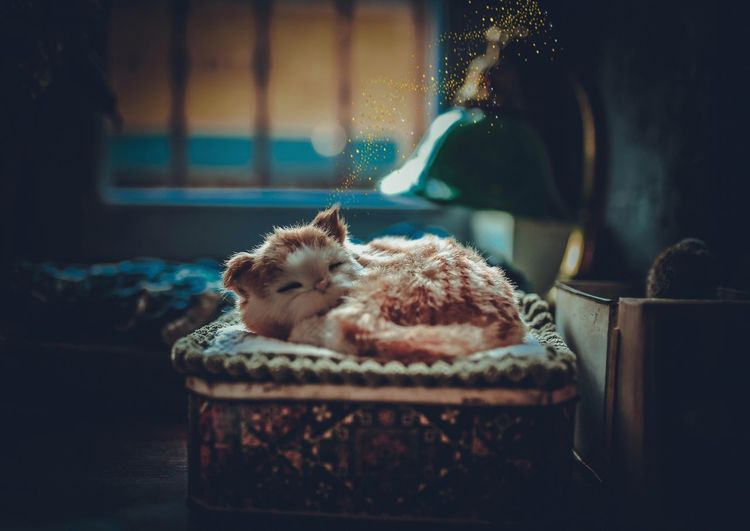 Close-up of kitten sleeping on pet bed at home