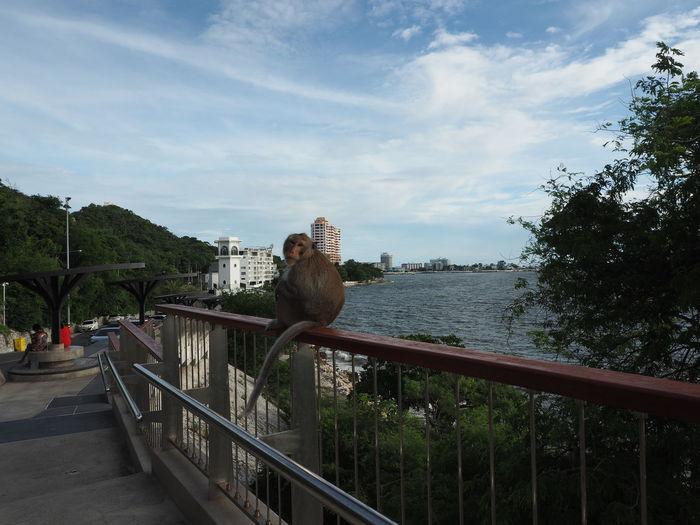 Man on bridge over river against sky in city