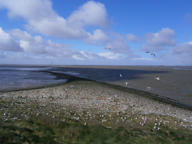 Part of Eider barrage (Eidersperrwerk), a storm surge barrier, in Schleswig-Holstein, Germany. Birds Damm Dyke  Eidersperrwerk Germany Horizon Over Water Man Made Object Nordsee Feeling🐚🌾 Nordseeküste North Sea Schleswig-Holstein Sea Showcase April