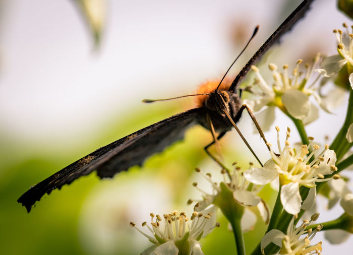 Animal Themes Animal Wildlife Animals In The Wild Butterfly Close-up Day Flower Flower Head Fragility Growth Insect Macro Nature No People One Animal Outdoors Plant Selective Focus EyeEmNewHere