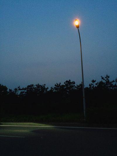 EyeEm Selects Illuminated Tree No People Night Outdoors Nature Growth Grass Sky Night Photography Road