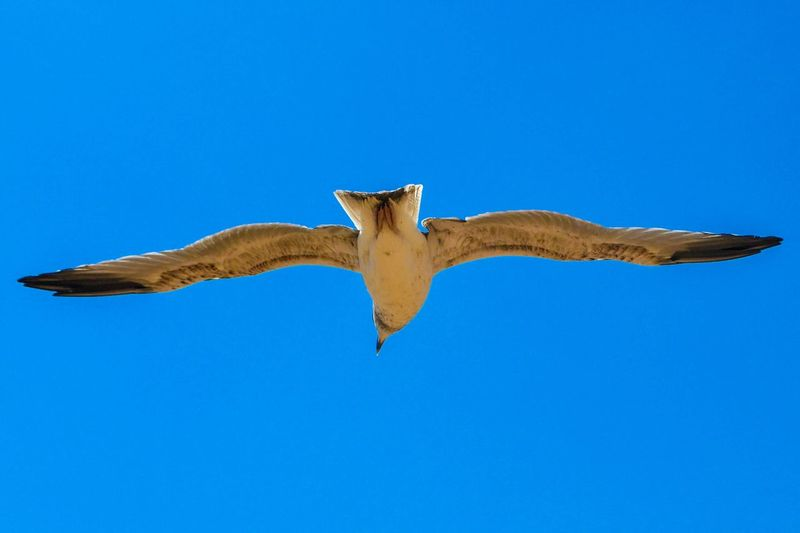 Seagull And Sky