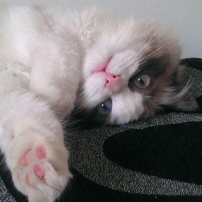 Holi Bondia Buenosdias Srenrique Gato gatolicismo cat gat sofa agusto