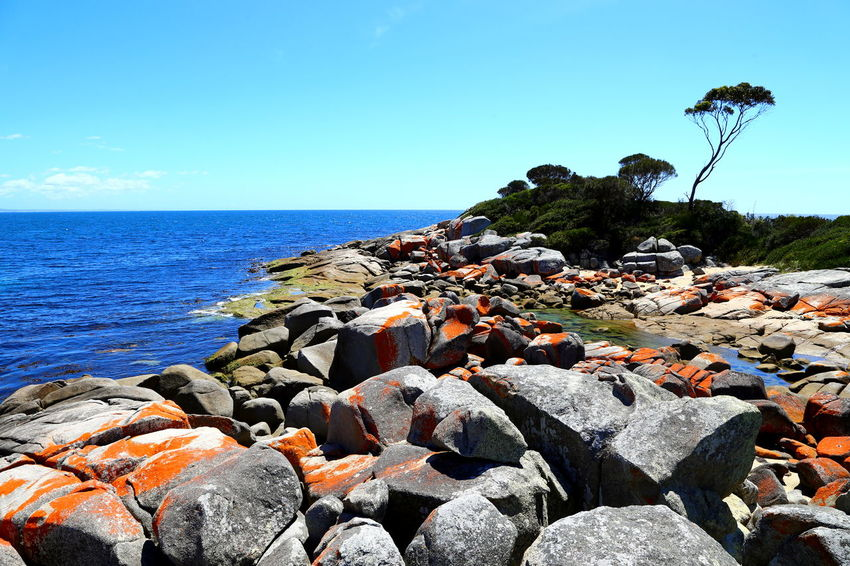 Bay of Fires - view along Skeleton Bay Beach Beauty In Nature Blue Clear Sky Coastline Landscape Colored Rocks Day Horizon Over Water Nature No People Orange Rocks Outdoors Pebble Beach Red Rocks  Rock - Object Rock Formation Rocks And Water Rocks On The Shore Scenics Sea Sky Tranquil Scene Tranquility Tree Water EyeEmNewHere Neighborhood Map
