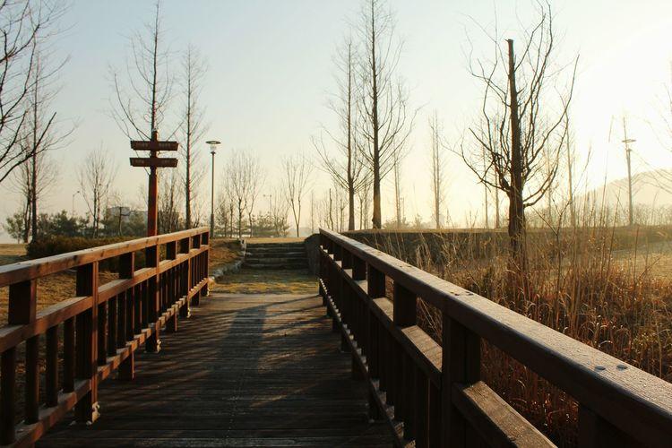 Boardwalk amidst trees against sky