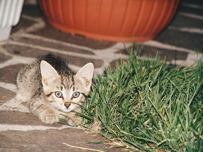 Portrait of kitten by grass at night