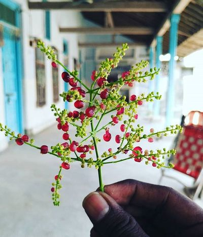 Instalove Red Berries Beed In Blue Village Home HNY Diwali 2K15 Like4like Follow4follow Portrait Photography